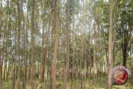 Pengelolaan hutan sosial dapat libatkan lintas OPD