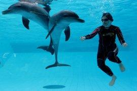 TSI suguhkan terapi autis dengan lumba-lumba