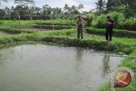 Babel Anggarkan Rp6 Miliar Tingkatkan Potensi Ikan