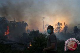 BPBD: Puluhan hektare hutan terbakar di Dumai