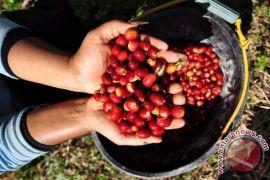 Pemkab Garut bagikan ratusan ribu bibit kopi
