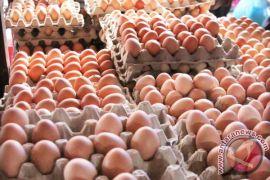 20.000 telur tercemar fipronil ditemukan di Polandia