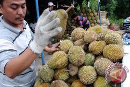 """Buah durian Bangka """"banjiri"""" Kota Palembang"""