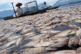 """KKP : Kematian ikan akibat """"umbalan"""" bisa diprediksi"""