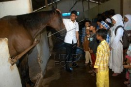 IPB ajak anak yatim mengenal kuda