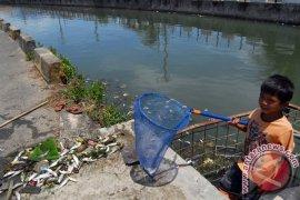 Ratusan Ikan Mati di Rawa Subulussalam