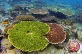 Ratusan penyelam dunia ramaikan Festival Selam Buleleng 2015