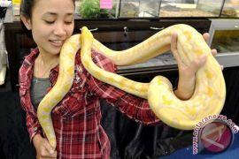 Warga diminta waspadai ular berbisa terkait musim kemarau