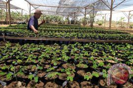 GenBI Banten hijaukan Desa Wisata Cikolelet Serang