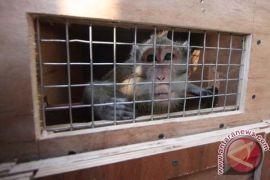 Pecinta primata Bandung kecam pertunjukan topeng monyet
