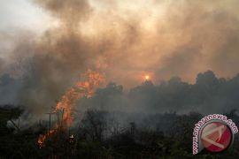 Lima instansi kerja sama cegah kebakaran hutan