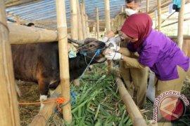 Petugas pantau kesehatan hewan kurban hingga penyembelihan