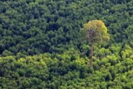 Tahura Akan Dijadikan Kawasan Konservasi