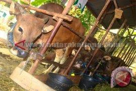Pemkot Lhokseumawe Bantu Kurban ke Desa