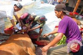Malaysians Want to Worship Sacrifice In Banua