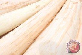 Indonesia jadi pusat kayu dunia
