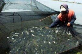 DKP Lebak Kembangkan Budidaya Ikan Air Tawar