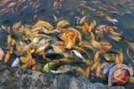 DKP Banten Berupaya Tingkatkan Produksi Ikan Tawar