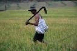 KTNA Banten Minta Petani Kembangkan Budidaya Sayuran