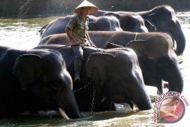 GLZoo mengadakan pelatihan pawang dan perawat gajah