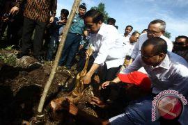 Riau canangkan menu sagu dalam rapat pemerintah