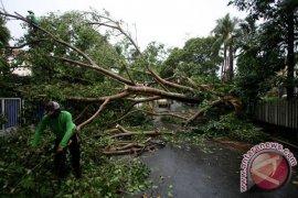 Hujan Deras Sejumlah Pohon Besar Tumbang