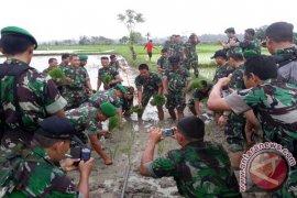 BPTP Aceh Latih TNI Tanam Padi Sistem Legowo