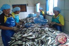 Babel Diminta Fokus Kembangkan Pengolahan Ikan-Pariwisata
