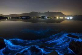 LIPI ungkap tentang bahaya ledakan populasi alga di ekosistem pesisir