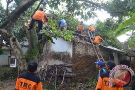 BPBD Kediri tangani pohon ambruk timpa rumah