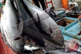 Ekspor ikan Bali naik 20,38 persen