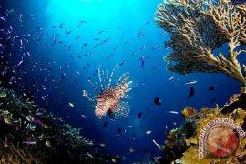 Bupati Inginkan Taman Laut Olele Dikenal Dunia