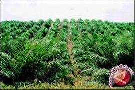 22 warga Aceh Tamiang tersangka kasus lahan