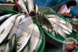 Bangka Barat Berupaya Tingkatkan Konsumsi Ikan
