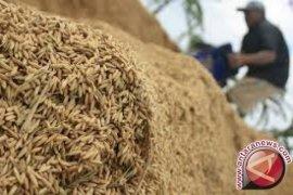 Masalah kemandirian pangan di Indonesia