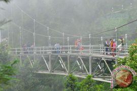 Penghijauan lereng Merapi sejak erupsi sudah 90 hektare