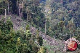 Jambi kehilangan tutupan hutan seluas 189.125 hektare