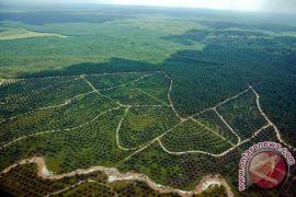 KLHK temukan alat berat buka hutan Kampar