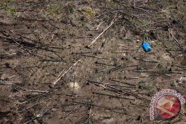 Api Taman Nasional Tesso Nilo berhasil dipadamkan