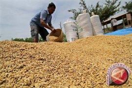 Nilai tukar petani Jambi turun 0,27 persen