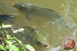 Mukomuko bangun tempat percontohan budi daya ikan