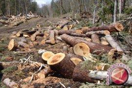 Bupati Tamiang minta aparat tindak ilegal loging