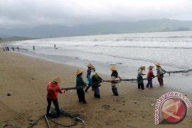 Nelayan Jaring Tarik Trenggalek Mulai Panen Ikan