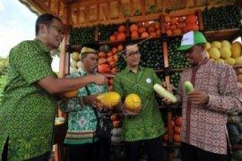 Sayuran Solusi Bagi Swasembada Pangan