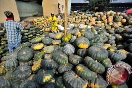 Oman ingin impor labu siam Indonesia
