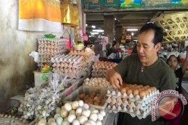 Mendag : harga telur naik karena pakan ayam mahal