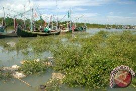 Konservasi Dan Pelestarian Hutan Mangrove