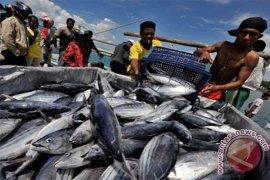 Harga Ikan Laut Di Sukabumi Melonjak Drastis