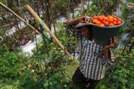 Petani Hortikultura Banten Belum Maksimal Pakai Pupuk Organik
