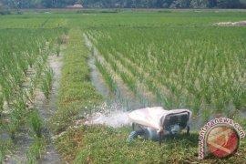 Petani Di Selatan Sukabumi Masih Kesulitan Air